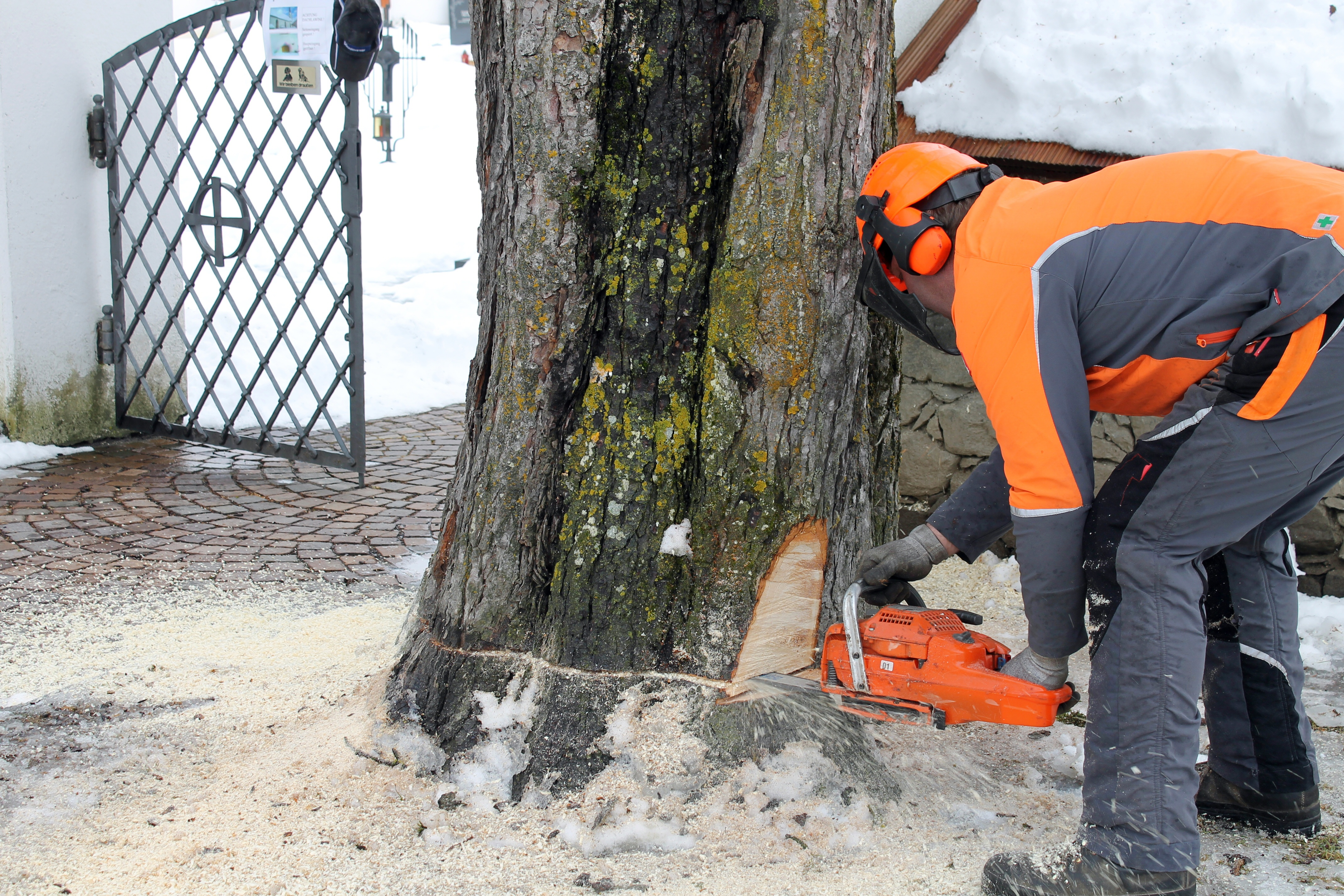 Der Baumfäller Odl Paul (Paul Bundschuh)