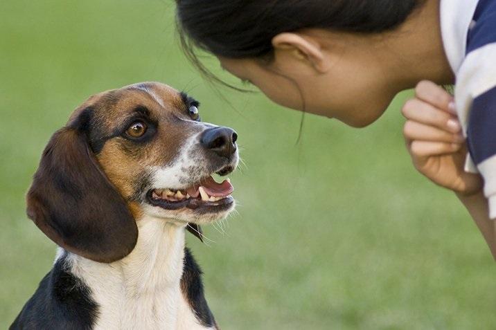 Landespolizeigesetz – Hundehaltung